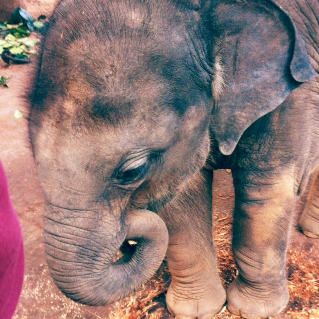Baby elephant: I can't resist including this photo - too darn cute