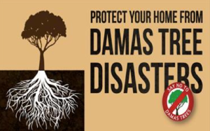 Say no to Damas trees!