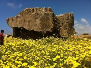 Spring has definitely sprung in Cyprus