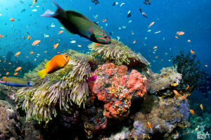 Sealife: An amazingly varied cast of colourful, aquatic characters live under the sea