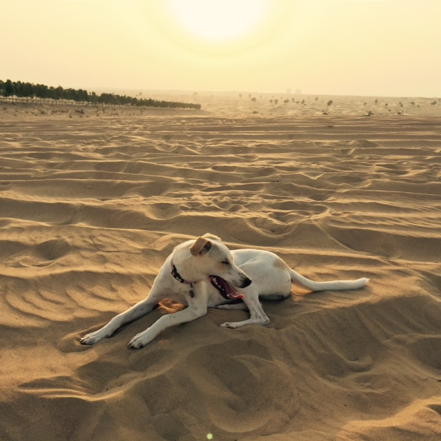 COMING SOON: Where to take dogs in Dubai