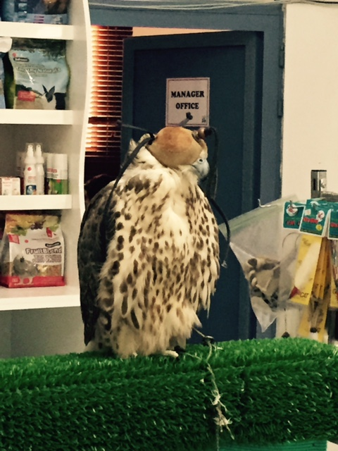 falcon-at-dubai-vet
